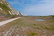Samphire Hoe Nature Reserve, created from spoil dug from the Channel Tunnel. Home to Early Spider Orchids. Dover, Kent, UK, April. - Adrian Davies