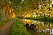 Row boats on the Canal du Midi near Carcassonne, Languedoc, France, May 2005.  -  David Noton