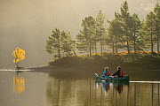 Couple canoeing on Loch Beinn a' Mheadhoin with Birch (Betula pendula) and Scots pines (Pinus sylvestris) on shore, Glen Affric, Highlands, Scotland, November 2014. - Terry  Whittaker