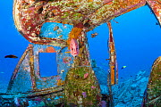 Giant squirrelfish (Sargocentron spiniferum) at cleaning station in the cockpit of wreck of Panorama Air Tour Beech H18S that crashed in 1983 after take-off from Keahole airport, Kona, Hawaii. - Doug Perrine