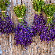Lavender (Lavendula) bouquets drying on old door, Provence, France. - Klein & Hubert