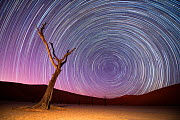 Ancient dead Camelthorn trees (Vachellia erioloba) with red dunes, and star trails, Namib desert, Sossusvlei, Namibia. Composite. - Wim van den Heever