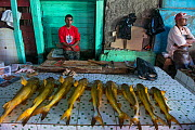 Catfish, various species, for sale at market in Georgetown, Guyana, South America  -  Pete Oxford