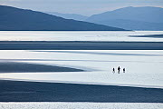 Luskentyre beach with three people wading in water, Isle of Harris, Outer Hebrides, Scotland, UK. June 2012.  -  Guy Edwardes