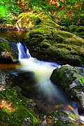 Long exposure of a Dartmoor stream, Devon, England, UK, August.  -  Oliver Hellowell