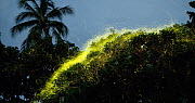 Timelapse of Fireflies (Lampyridae) flying around a tree, Bicol, Philippines. - Jurgen Freund