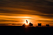 Cameraman Lindsay McCrae driving skidoo with equipment across ice at sunset for BBC Dynasties Penguin programme. Atka Bay, Antarctica. February 2017. - Stefan Christmann