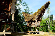 Traditional houses in Tana Toraja. Toraja is an ethnic group in West and South Sulawesi. Indonesia. 2015. - Enrique Lopez-Tapia