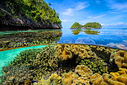 Split level image of Leather corals (Sarcophyton sp.) flourishing in shallow water close to uninhabited coral islands. Misool, Raja Ampat, West Papua, Indonesia. Ceram Sea. Tropical West Pacific Ocean...  -  Alex Mustard