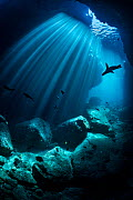 RF - Silhouette of a California sea lion (Zalophus californianus) swimming through an underwater cave. Los Islotes, La Paz, Baja California Sur, Mexico. Sea of Cortez, Gulf of California, East Pacific...  -  Alex Mustard