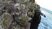 Man abseiling down a cliff and collecting seabird eggs, including those of Common guillemots (Uria aalge), camera attached to helmet, Skoruvikurbjarg cliffs, Langanes Peninsula, Iceland, May. - Terry  Whittaker
