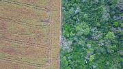 Drone shot tracking over the frontier between the Amazon rainforest and large agricultural fields of maize, showing areas of forest loss, Brazil, 2019.  -  Laurie Hedges