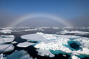 Fogbow over sea ice. Fogbows are similar to a rainbow, but produced by very small droplets in fog or cloud, which diffract light, instead of large raindrops which do not, Svalbard, Norway, July.  -  Erlend Haarberg