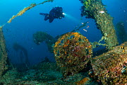 Rebreather diver exploring the wreck of Italian tugboat Ursus which sank on 31 January 1941, covered with yellow sponges (Aplysina cavernicola), near Stoncica lighthouse, Vis Island, Croatia, Adriatic...  -  Franco Banfi