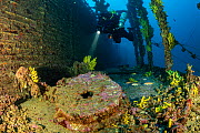 Rebreather diver exploring the sunken Brioni steam passenger/cargo ship, which sank in February 1930, with yellow sponges (Aplysina cavernicola), south-eastern coast of Vis Island, Croatia, Adriatic S...  -  Franco Banfi