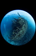 Giannis D shipwreck, view from the stern which rests on the sea floor at 28 meters. This 100 meter long cargo vessel sank in 1983 after colliding with the coral reefs of Sha'b Abu Nuhas. Egypt, Red Se...  -  Brandon Cole