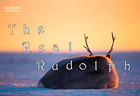 The Real Rudolph